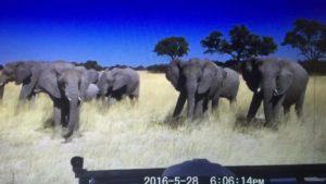 象さんの目つきが怖い 373