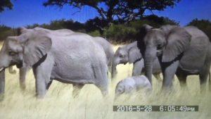 象さんの目つきが怖い 108