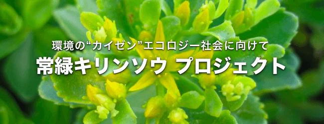 エコロジー社会に向けて『常緑キリンソウ』プロジェクト